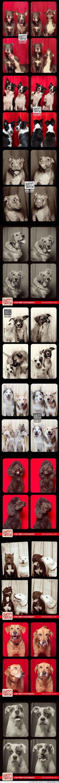¿Habrá cosa mejor que un montón de perros en un fotomatón?