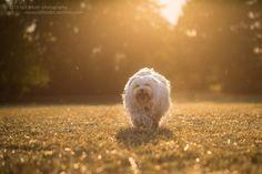 https://flic.kr/p/wcXVcv | Sun | Ein Hund im Haus ist ein gutes Zeichen für das Haus.
