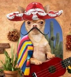 Happy Cinco de Mayo Images and Quotes: Hi friends hope you all are okay, Today we will give you the best collection of Cinco de Mayo Images and Quotes. Happy Cinco de Mayo Images Do you think which may be possible… Continue Reading → Funny Dogs, Funny Animals, Cute Animals, Party Animals, Little Dogs, Cute Puppies, Cute Dogs, Chihuahua Love, Funny Chihuahua