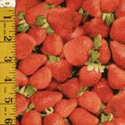 strawberry fabric for canning