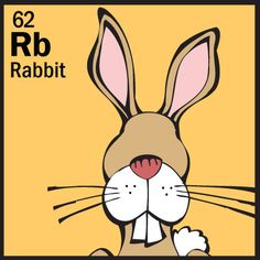 The Animal Table Wild Thing of the Week is the Rabbit…