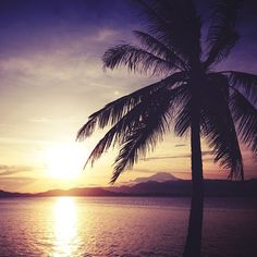 Palm tree and sunset...A nice way to end your day...or imagine this view from your patio or your large kitchen window!
