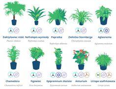 Rośliny doniczkowe oczyszczające powietrze