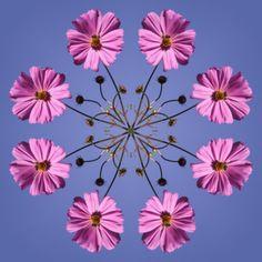 kaliedescope idea using photos Mandala Art, Flower Mandala, Mandala Pattern, Radial Balance, Pyrography Patterns, Mudras, Kaleidoscopes, Pattern Drawing, Sacred Art