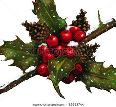 Pastel Drawing Of Holly, Berries, Pine Cones In Snow Stock Photo ...