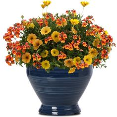 Proven Winners - Good Morning combination container recipe containing Sunsatia® Blood Orange™ - Nemesia hybrid, Supertunia® Honey™ - Petunia hybrid, Br. Container Flowers, Container Plants, Container Gardening, Beautiful Gardens, Beautiful Flowers, Yellow Plants, Proven Winners, Landscaping Plants, Landscaping Ideas