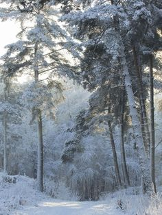 The Emmerdennen is one of the oldest woodlands in the province of Drenthe, Netherlands