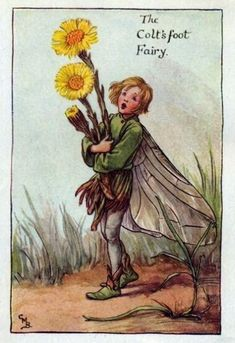 Coltsfoot Flower Fairy Vintage Print by Cicely Mary Barker. first published in London by Blackie, 1923 in Flower Fairies of the Spring.