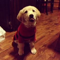 Community Post: 28 Pictures Of Golden Retriever Puppies That Will Brighten Your Day