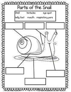 Let's Label the Creatures! Worm-Snail-Fish Labeling Unit