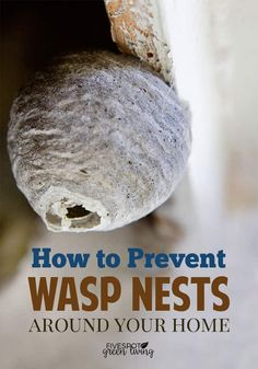 Do you know the first step in natural pest control is to prevent wasp nests around your home and yard? Here are some good tips to keep them away. via control
