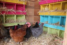 super cute chicken coop! Like the colors...but want plastic 5 gal buckets or boxes/tubs instead of wood.