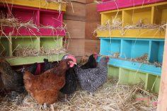 super cute chicken coop!
