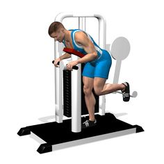 GLUTEUS MACHINE INVOLVED MUSCLES DURING THE TRAINING GLUTES