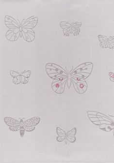 Euro a roll length width equal matching 95 USD plus shipping Butterfly Species, Perfect Wallpaper, Apollo, Euro, Colours, Wallpapers, Graphic Design, Bed, Pattern