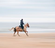 America& Best Cities for Fall Travel: Virginia Beach, VA Places To Travel, Places To See, Travel Destinations, Beach Horseback Riding, Trail Riding, Virginia Beach, Virginia Usa, Famous Places, Travel And Leisure