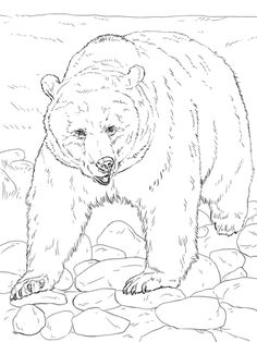Realistic Grizzly Bear Coloring page
