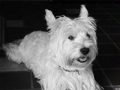 Duke in black and white