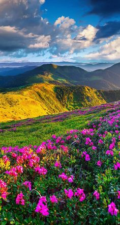 Beautiful Landscape with beautiful flowers ❤️❤️❤️