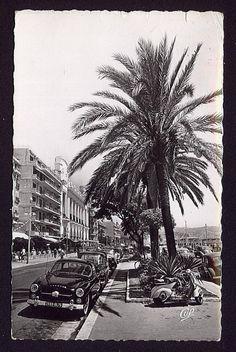 RPPC Nice Promenade des Anglais Walkway of the English Palm