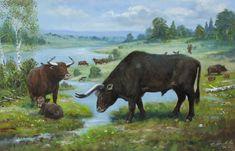 http://www.petrmodlitba.cz/images/03_zoologie/Pratur%20-%20Bos%20primigenius.jpg