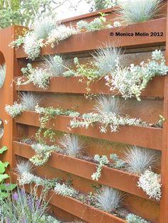 Succulenter på rostig vägg