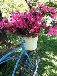 Through My Porch Window: Bicycle Flowers ✫✫ ❤️ *•. ❁.•*❥●♆● ❁ ڿڰۣ❁ ஜℓvஜ♡❃∘✤ ॐ♥..⭐..▾๑ ♡༺✿ ♡·✳︎· ❀‿ ❀♥❃.~*~. FR 01st APR 2016!!!.~*~.❃∘❃ ✤ॐ ❦♥..⭐.♢∘❃♦♡❊** Have a Nice Day! **❊ღ༺✿♡^^❥•*`*•❥ ♥♫ La-la-la Bonne vie ♪ ♥❁●♆●✫✫