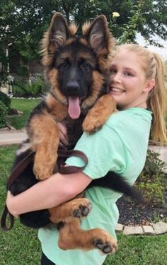 Puppy GSD's love being held.