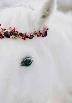 by Amy Melampy /Horse Crowned in Flowers