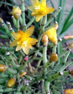 Pequena amarela. By : Zanchetta Marcos