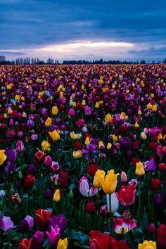 Relic Field, Oregon,  US