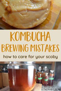 Best Kombucha, Kombucha Flavors, Kombucha Scoby, How To Brew Kombucha, Kombucha Brewing, Kombucha Fermentation, Kombucha Drink, Brewing Beer, Flavored Kombucha Recipe