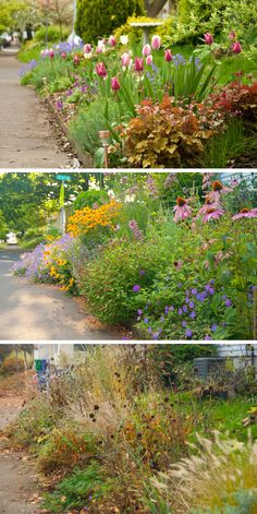 3 seasons in one border ~ Planting ideas to keep interest flowing throughout the seasons.