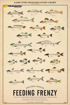 An interesting identification chart for fish - half skeleton, half meat!
