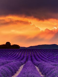 lavender fields, valensole, provence-alpes-côte d'azur (what a fantastic color combination!)