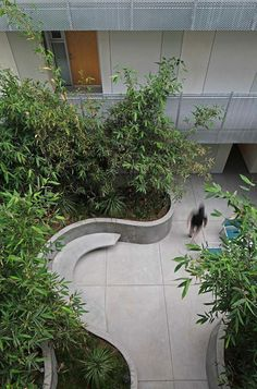 Mark Tessier Landscape Architecture - Courtyard at La Brea