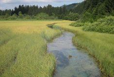 Zelenci Springs, the source of the Sava Dolinka river