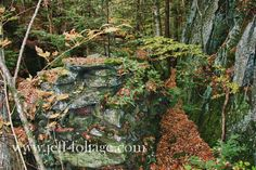 Amid October's fall foliage, a forgotten place is found - New England fall foliage My attention is drawn to the rock wall that this stream has cut through the centuries and something doesn't look right. First you have the rock wall then there is a second inner man-made rock wall with a space between the two walls.