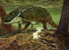 Eryops - Late Carboniferous to Early Permian  At 2 m long, this amphibious tetrapod was one of the top predators in its environment. | D. W. Miller