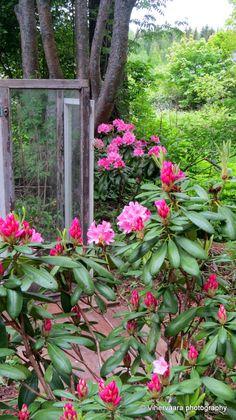 Shadow Garden Green Gables, Garden, Plants, Garten, Lawn And Garden, Gardens, Plant, Gardening, Outdoor