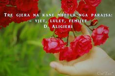 hejedrite: Roses
