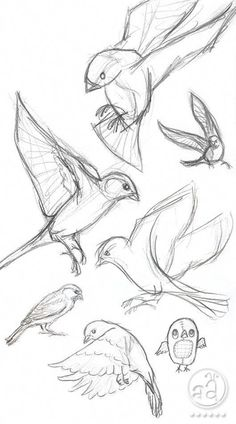 40 Free and Simple Animal Sketches Ideas and Inspirations for Drawing – Samir – Animal Draw… . Secrets of being well-groomed 40 Free and simple animal sketches Ideas and inspiration for drawing – Samir – Animal Draw… . Bird Drawings, Pencil Art Drawings, Art Drawings Sketches, Cool Drawings, Sketch Drawing, Drawing Ideas, Drawing Tips, Learn Drawing, Drawing Drawing