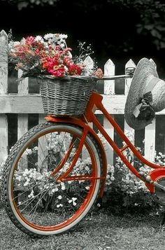 Bicycle Decor, Bicycle Basket, Old Bicycle, Bicycle Art, Bike Baskets, Color Splash, Color Pop, Colour, Bike Planter