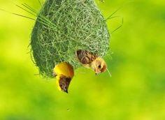 Bird Animal Nature Wildlife