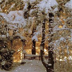 Snow flocked trees and bench Toni Kami Joyeux Noël  Winter photography