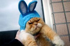 Angry Cat in Rabbit Costume
