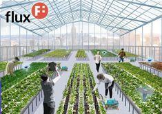 robot hidroponia, cultivos hidroponicos #hidroponia