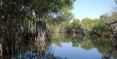 La Tobara, precioso paseo entre manglares (Nayarit) | México Desconocido