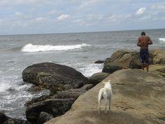 Amigo fiel e surfista anônimo