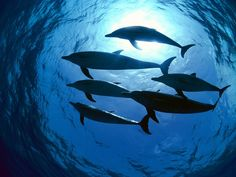 Save the Dolphins-The most intelligent animal of the oceans needs help!